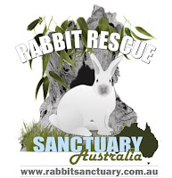 Rabbit Rescue Sanctuary Volunteering