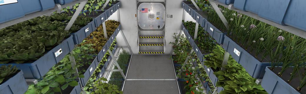 在外太空也可以吃新鮮蔬菜了!NASA用LED燈種植蔬菜成功