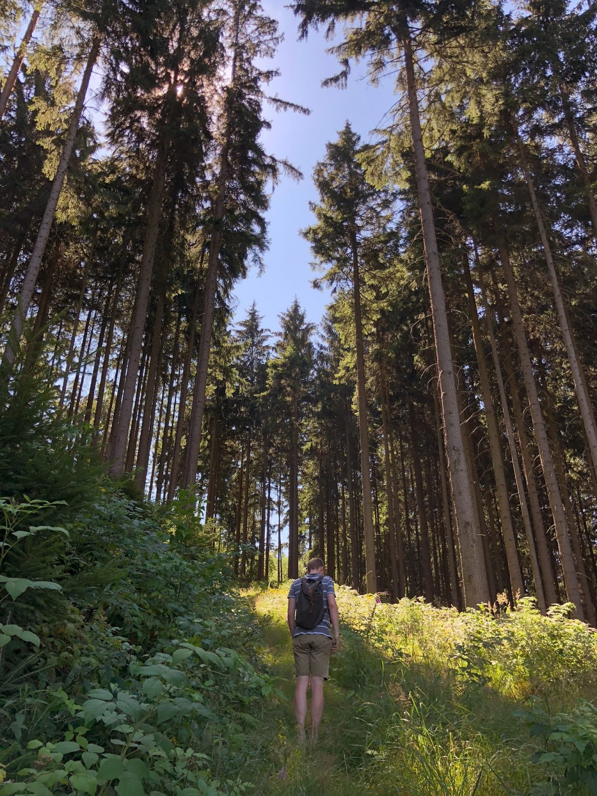 forest of ilmenau thuringia