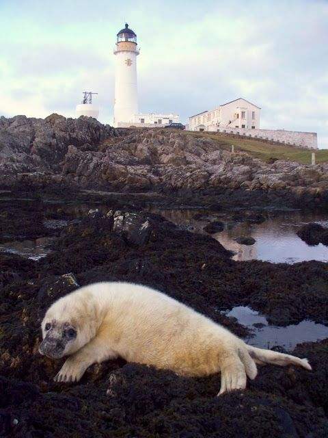 Scottish Islands Explorer: Seal Off Fair Isle
