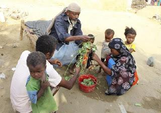 Dilanda Kelaparan Akibat Pemberontakan Syiah Houthi, Warga Yaman Terpaksa Makan Daun