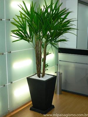 Construindo um castelinho plantas para sombra e jardins for Plantas de interior tipo palmera