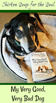Chicken Soup for the soul book rescue senior dog