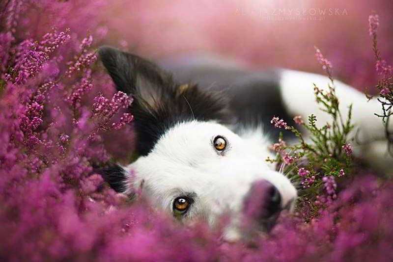 dog-photography-alicja-zmyslowska-02