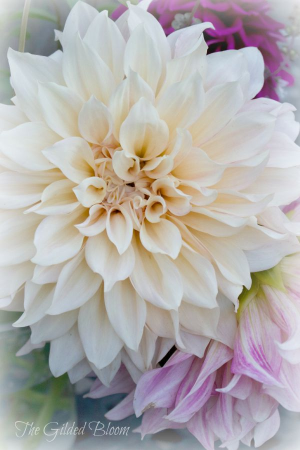Cafe au lait dahlia arrangement the gilded bloom for Flowers that look like dahlias