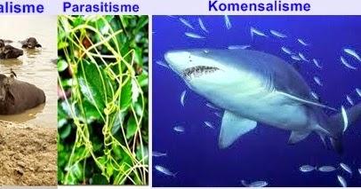 parasitisme kbbi