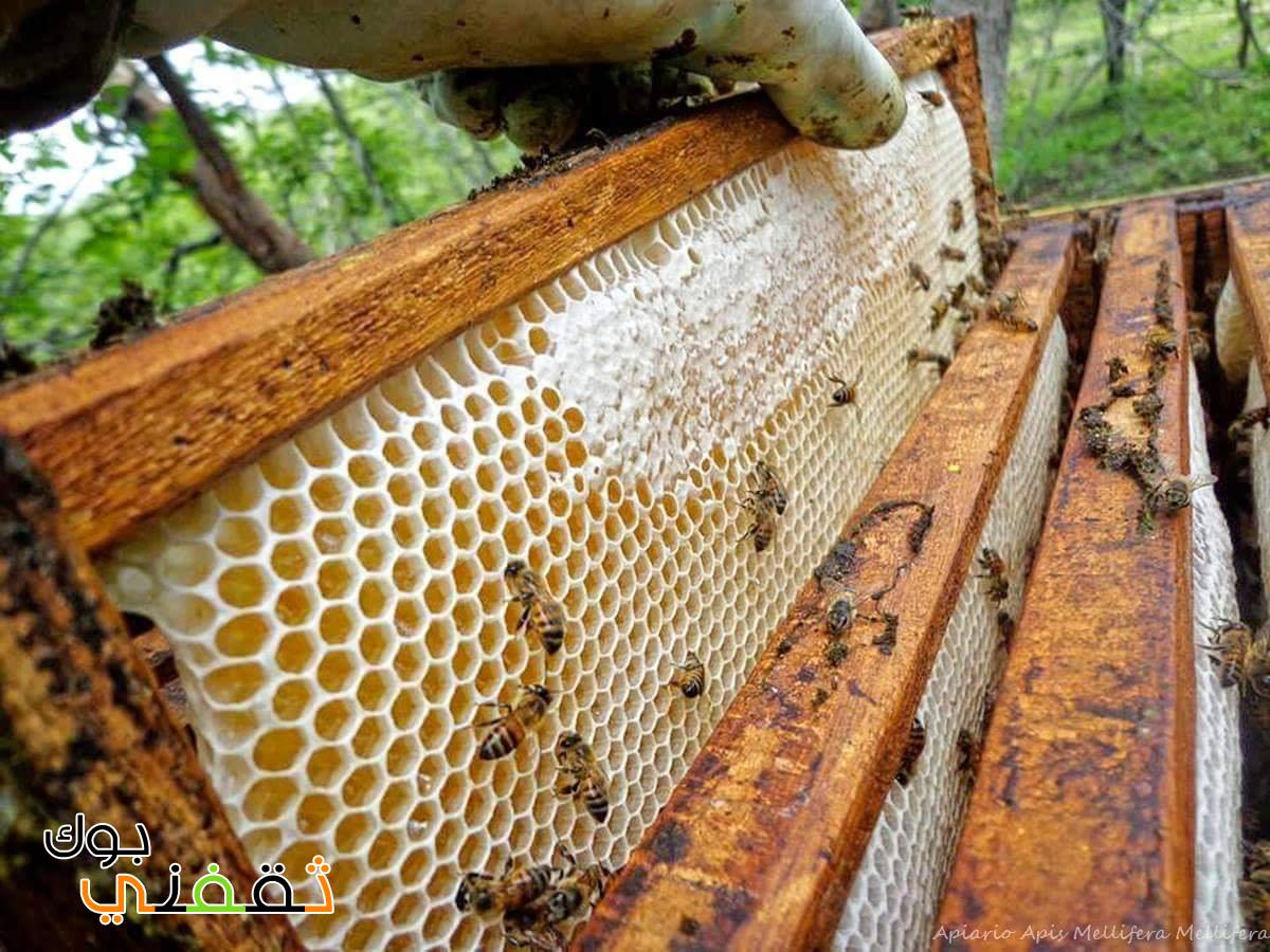 ما هي خلية النحل وماذا يوجد بداخلها ؟