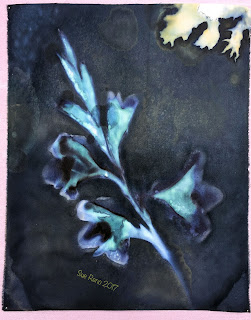 Wet Cyanotype_Sue Reno_Image 76