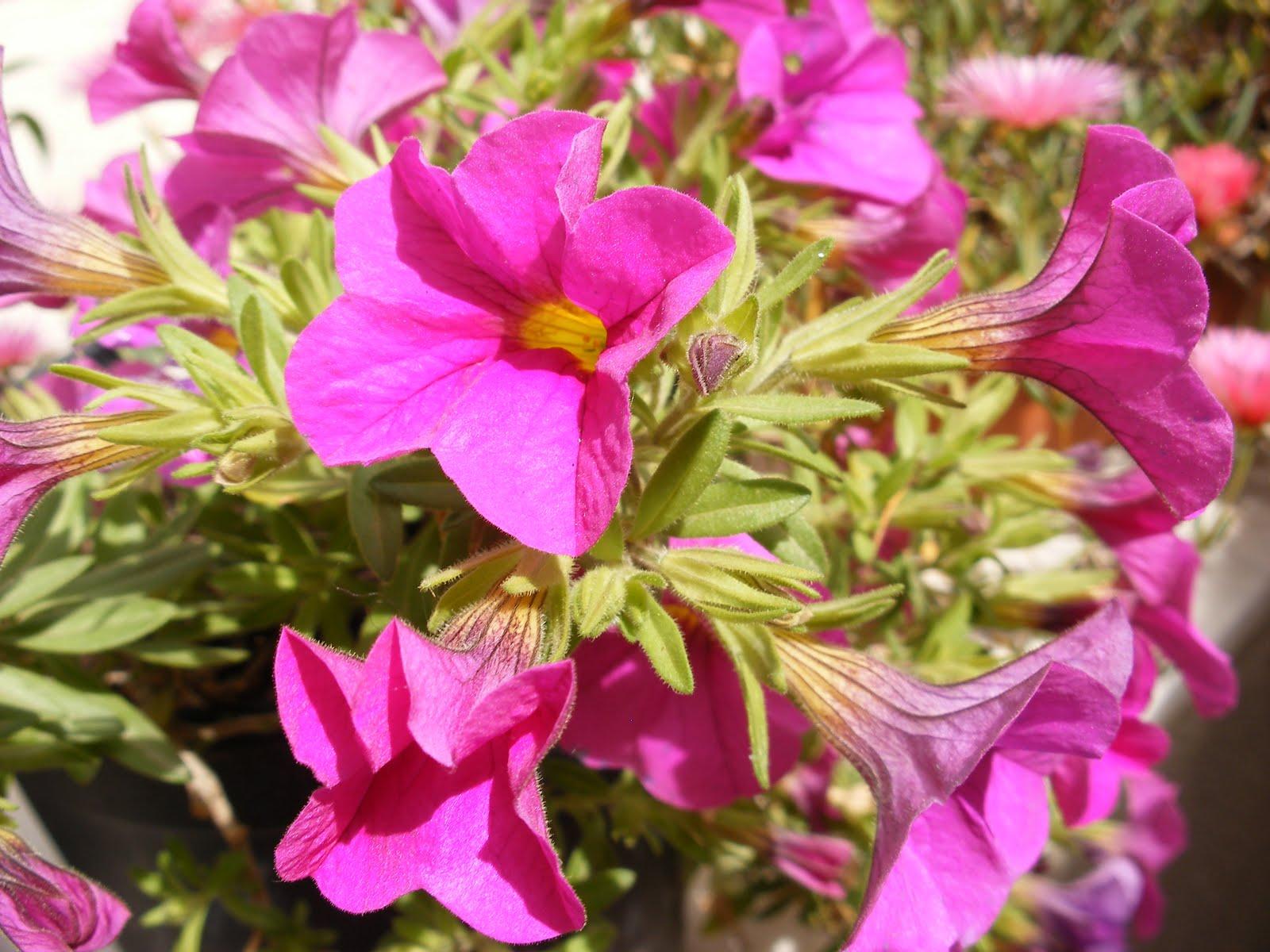 El huerto de ram n flores de plantas ornamentales iii for Plantas ornamentales con flores