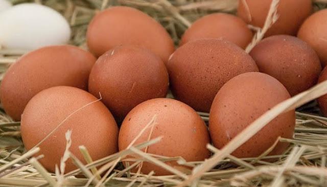 Kandungan gizi dan manfaat telur ayam ras