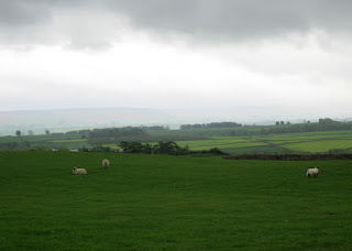 Sheep grazing under looming gray clouds, Yorkshire Dales, England