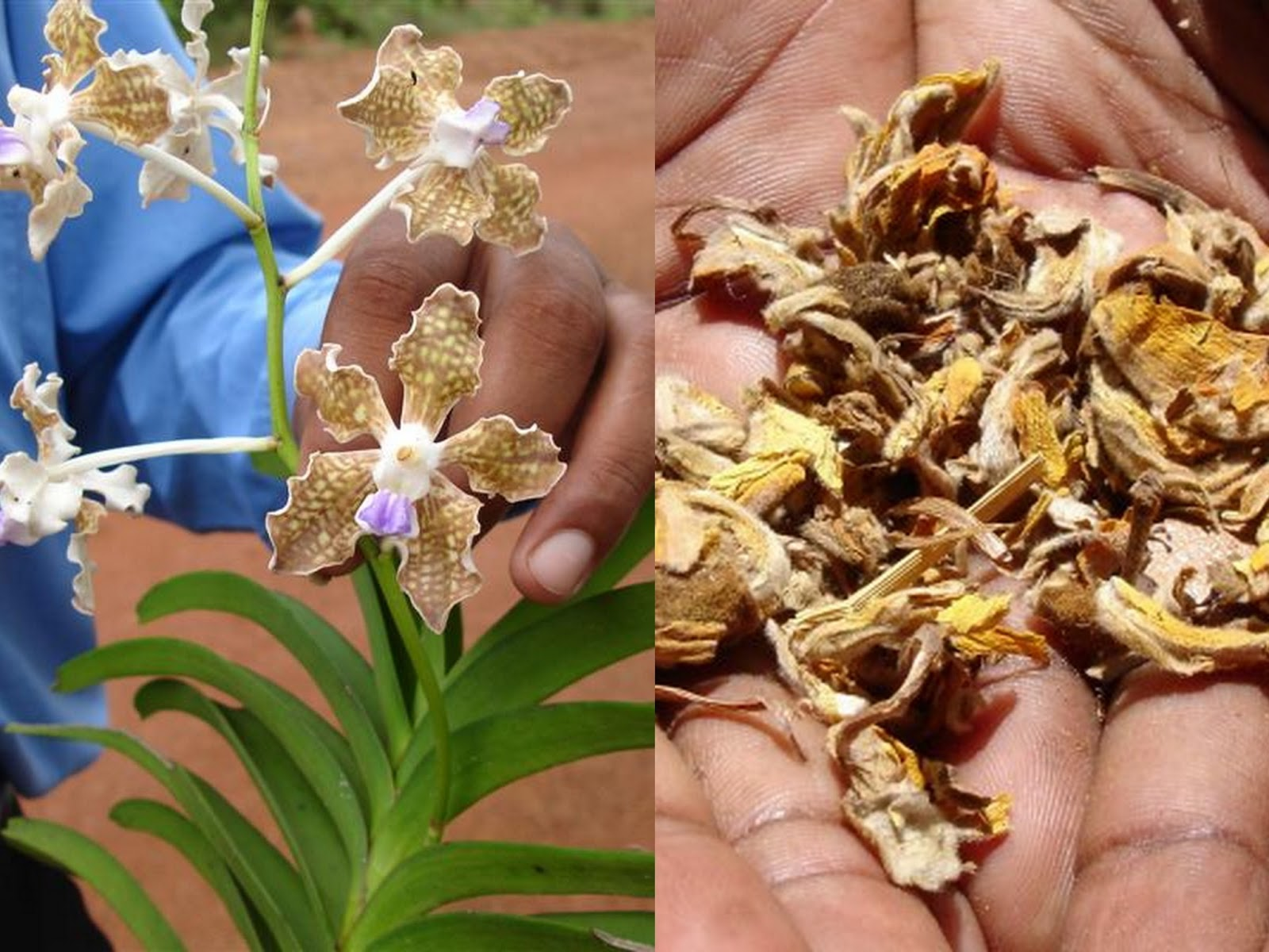 essay on medicinal plants essay on medicinal plants