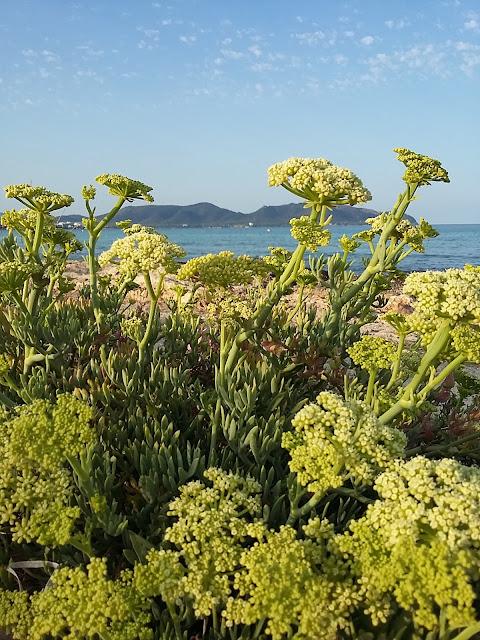 flori galbene salbatice