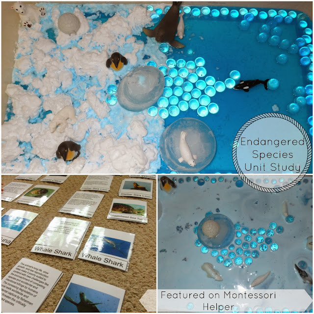 Sensory play, Montessori Inspired Activity, Endangered species, Ocean animals, global warming, Science and more www.naturalbeachliving.com