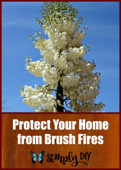 Best Fire Resistant Plants