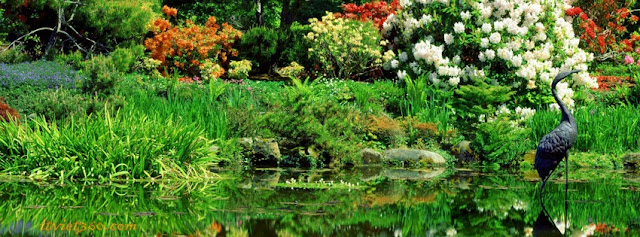 Ảnh bìa Facebook thiên nhiên đẹp - Cover FB timeline nature, anh bia dep