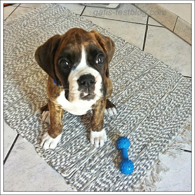 Boxer Amy ist 2 Jahre bei uns