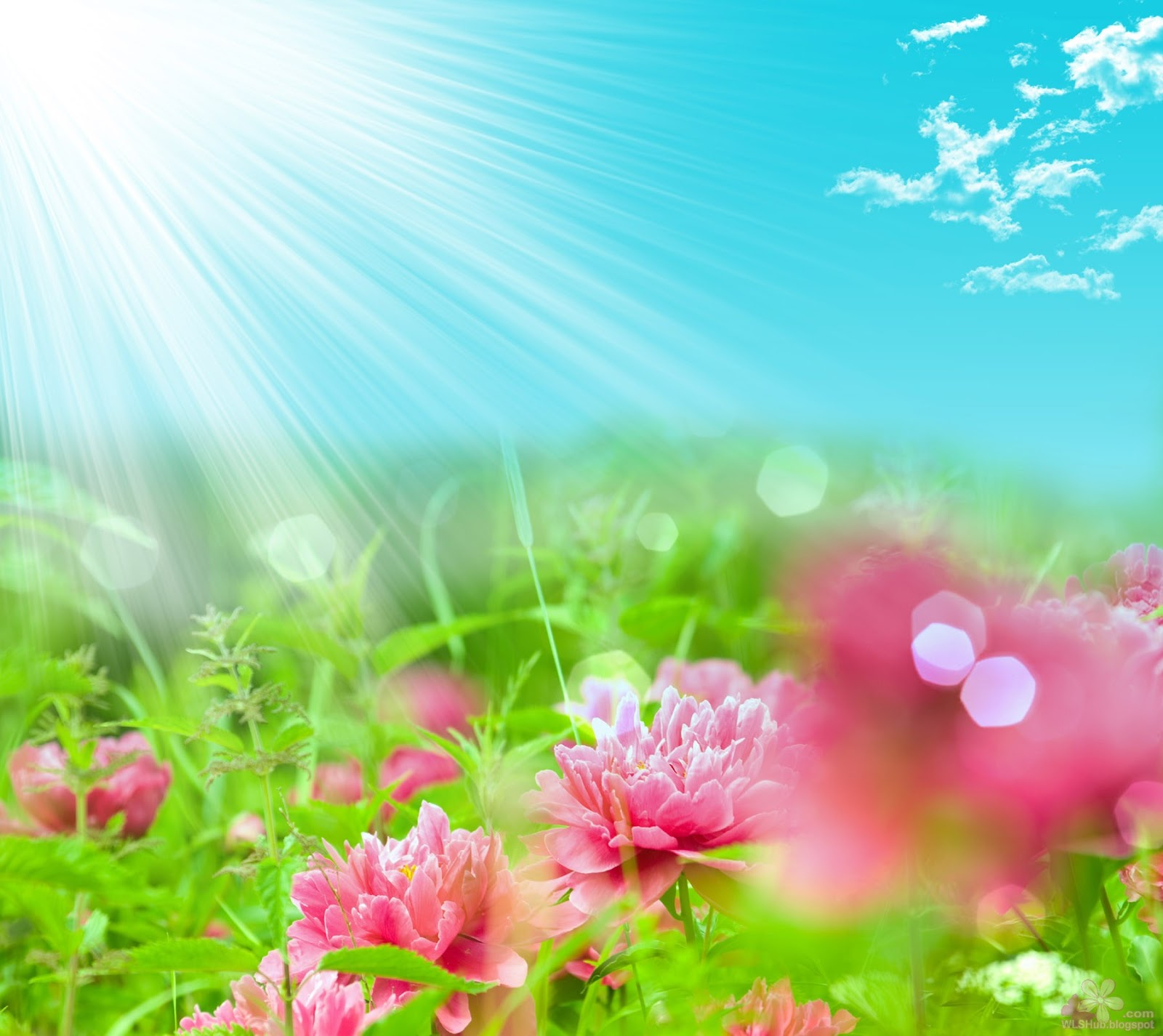 3D Fantasy Flowers Wallpapers Free Download HD Pictures