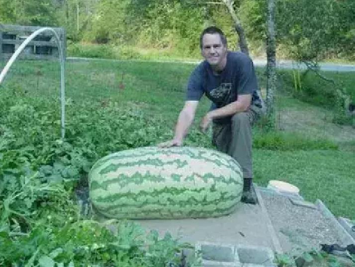 world's biggest watermelon