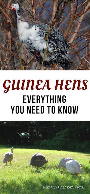 guinea hens as pets