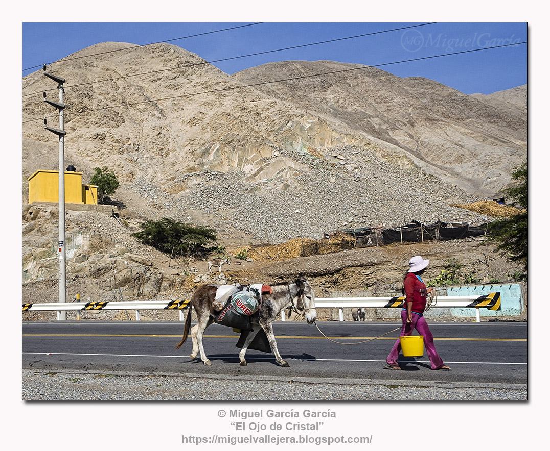 Tres asnos y mujer con balde amarillo en la ruta de Lunahuaná..