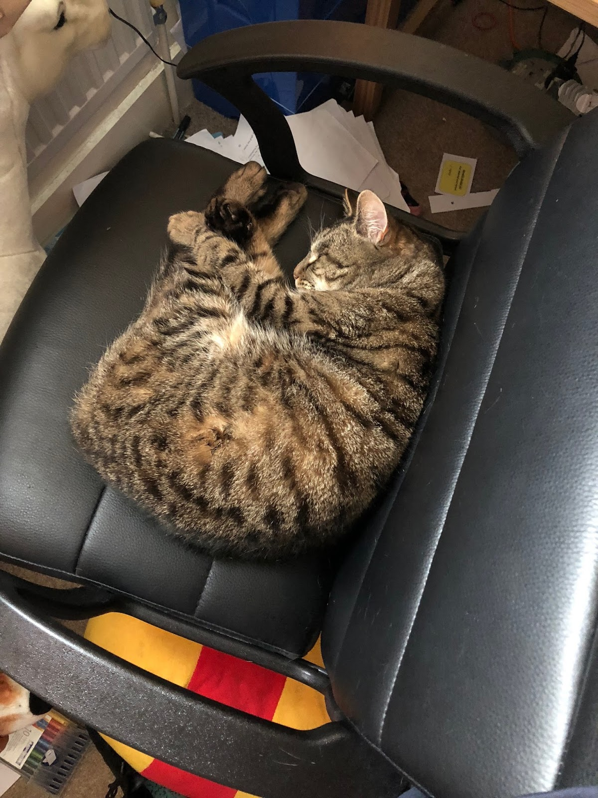 Cat asleep in chair