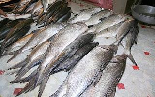 umpan mancing ikan belanak,umpan mancing ikan belanak model,umpan mancing ikan belanak di muara,cara membuat umpan ikan belanak,mancing belanak malam hari,lokasi mancing belanak,