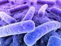 """<Img src =""""Bacterias-periodontales-que-aparecen-en-la-neumonía.jpg"""" width = """"220"""" height """"166"""" border = """"0"""" alt = """"Microbios de una bolsa periodontal"""">"""