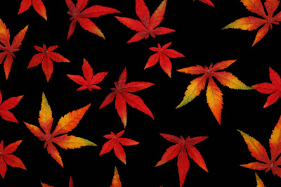 autumn-leaves-hdimages