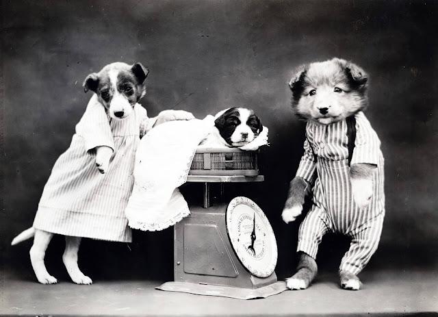 metamora herald dressed dogs