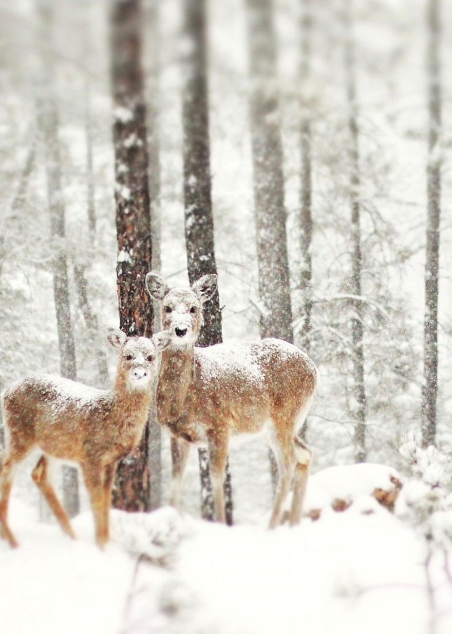 winter-landscapes-13