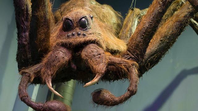 "Encuentran una tarántula similar a Aragog, la araña del Bosque Prohibido de ""Harry Potter"""
