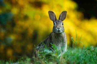 Rabbit tricks story in hindi