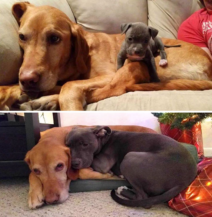 50 Heart-Warming Photos of Animals Growing Up Together - Then And Now
