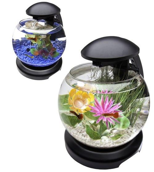 small glass betta aquariums fish tank with light ~ art projects art ...