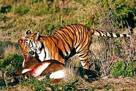 Pengertian Seleksi Alam (Simbiosis Parasitisme, Kompetisi, Predasi), Contoh dan Faktor-faktor yang Mempengaruhi Seleksi Alam