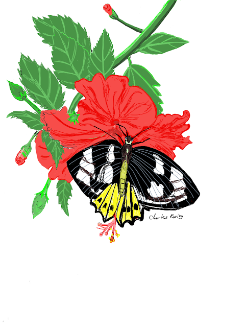Red hibiscus flower and priamus butterfly