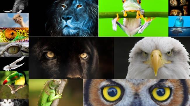 تحميل 18 صورة مختلفة للحيوانات في الحياة البرية بجودة عالية