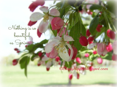 pink crab apple flowers, go for a walk, nothing is so beautiful as Spring, Gerard Manley Hopkins, Florals-Family-Faith, Cindy Rippe