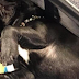 New York Senator to Establish Pet Passenger Bill for State Airlines