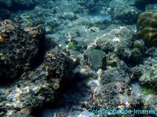 Peces tropicales snorkel en Maldivas