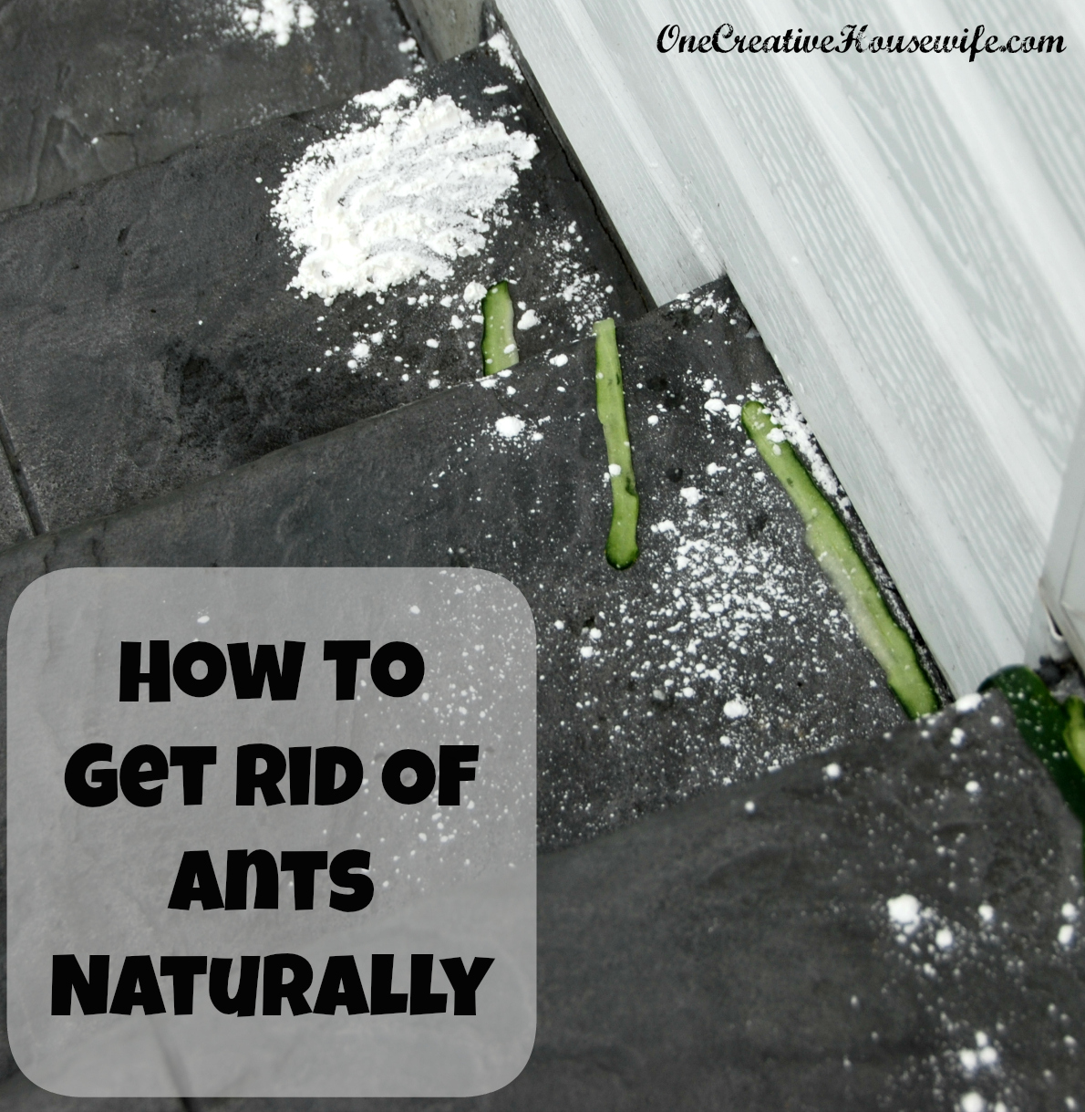 Getting Rid Of Ant