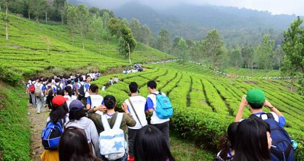 Tempat Wisata Alam di Bogor argo gunung mas
