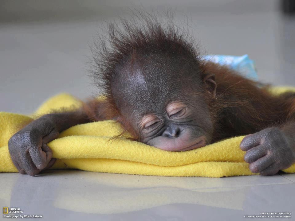 Fotos De Todos Los Bebés Del Reino Animal 2013