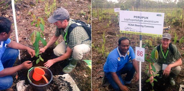 Aktivitas Penanaman Pohon di Lahan Gambut Sumatera Selatan Bersama Grant Rosoman - Co-Chair HCS Steering Group. Sumber Foto : Twitter HCS Approach
