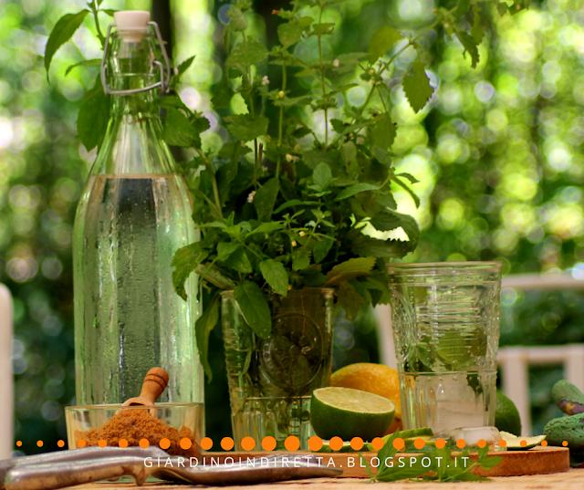 come preparare il mojito dei veri giardinieri - un giardino in diretta
