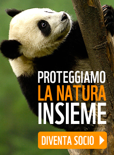 http://iscrizioni.wwf.it/index.php?id=4