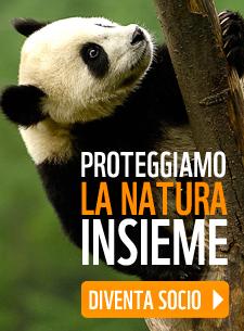 http://iscrizioni.wwf.it/index.php?id=4