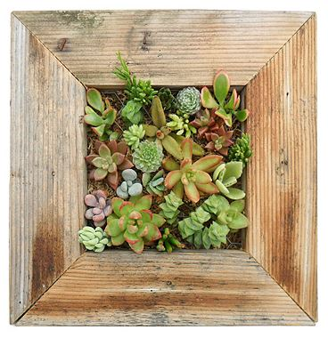 succulent+planter 6 Ways to Uniquely Decorate Your Home 15