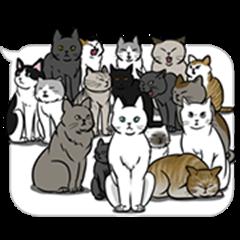 말풍선 고양이 애니메이션 스티커